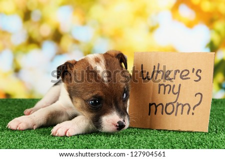 Abandoned little puppy seeking home on green grass on natural backgraund - stock photo