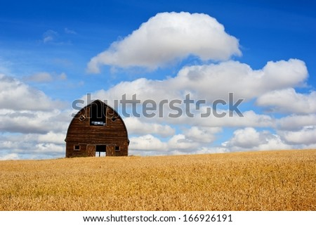 Abandoned old barn in field of ripe wheat - stock photo