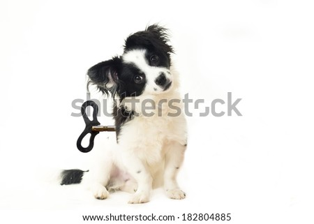 abandoned puppy, dog toy concept, isolated on white - stock photo