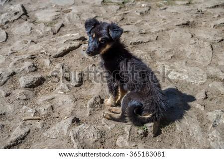 Abandoned sad puppy in Nepal - stock photo