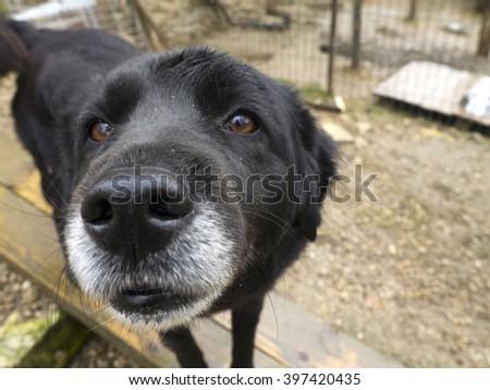 abandoned senior dog, sad old dog  - stock photo