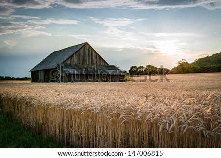 abandoned shack in the field at sunset - stock photo