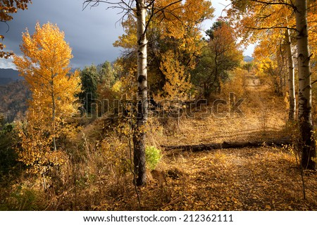 Abandoned trail in autumn mountain forest  - stock photo