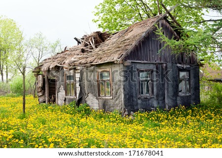 Abandoned wooden cottage house among yellow dandelions in Podlachia / Poland - stock photo