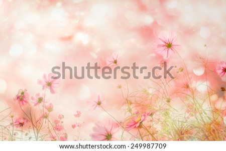 Abatract. Sweet color cosmos flowers in bokeh texture soft blur for background with pastel vintage retro style.