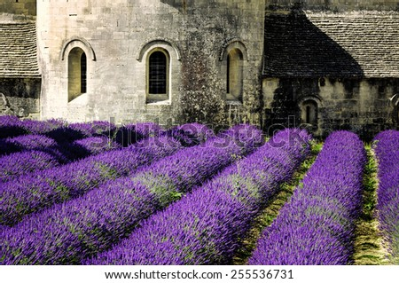 Abbey of Senanque and blooming rows lavender flowers. Gordes, Luberon, Vaucluse, Provence, France.  - stock photo