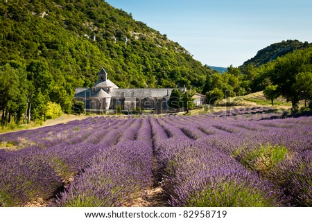 Abbey Senanque - famous must-see place in Provence, France