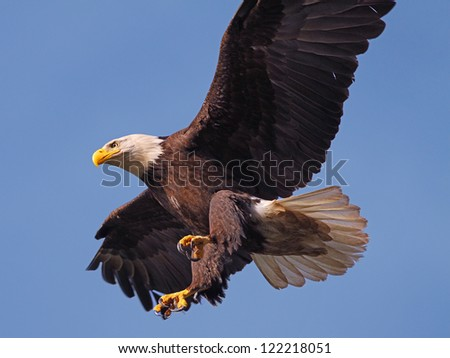 About To Land - stock photo