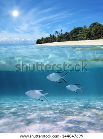 Above and below sea surface near tropical island beach with Palometa fish underwater over sandy seabed - stock photo