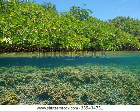 Above and below the sea surface near mangrove trees with a shallow coral reef underwater, Caribbean, Panama, Central America - stock photo