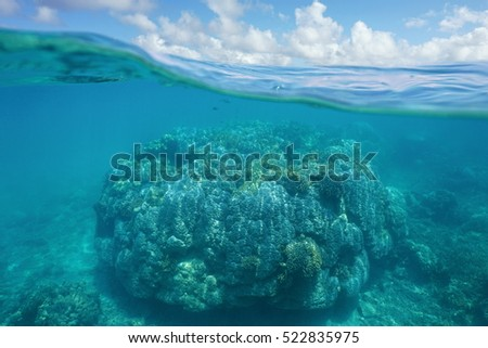 Above and below water, massive stony coral underwater and blue sky with clouds split by waterline, New Caledonia, south Pacific ocean