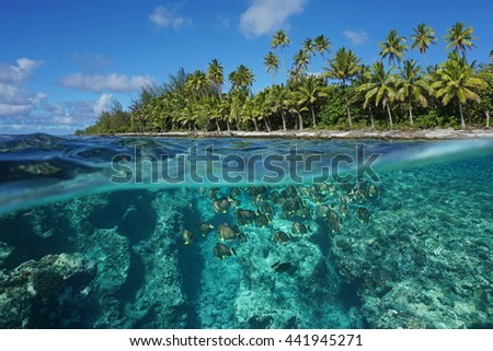 Above and below water surface, tropical shore with coconut trees and the reef with a shoal of fish underwater, Huahine island, Pacific ocean, French Polynesia - stock photo