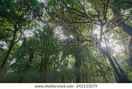 Above ground mountain forest in Doi Inthanan National Park, Chiang Mai THAILAND - stock photo