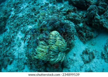 Absolute underwater scene in Dimakya island, Palawan. - stock photo