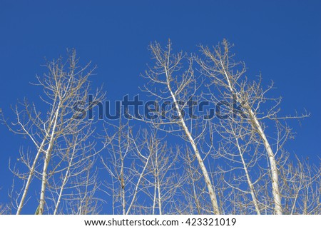 Absrtact dry tree branch against blue sky - stock photo