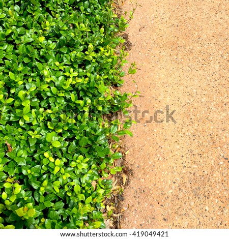Abstract Aerial Landscaping Jasmine Flat Lay Vignette - stock photo