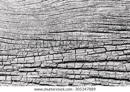 Abstract Art Striped of Dry Wood Black and White