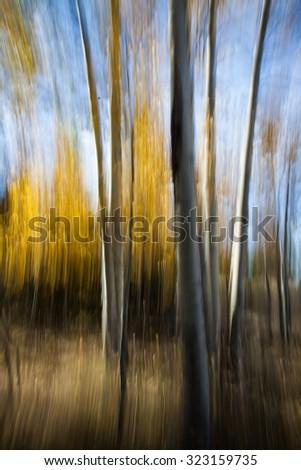 Abstract Aspen Trees - stock photo