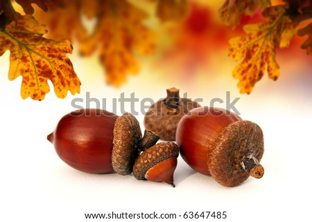 Abstract autumn acorns - stock photo