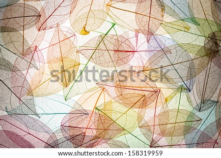 Abstract autumn background. Beautiful leaves texture - stock photo