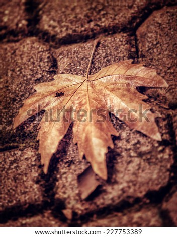 Abstract autumn background, grunge style photo of dry maple leaf on brown brick wall, detail of fall nature, weather change concept - stock photo