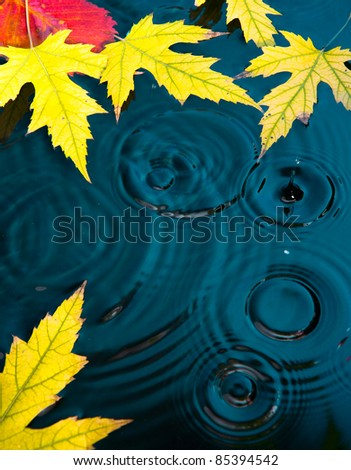 abstract autumn background with yellow leaves fallen on the water - stock photo