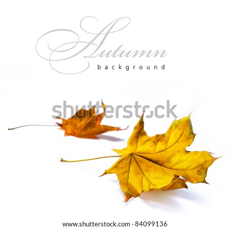 abstract autumn backgrounds - stock photo