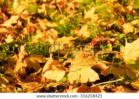 abstract autumn fallen leaves background - stock photo