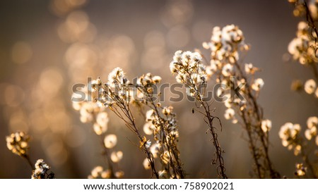 abstract autumn flowers meadow - soft photo
