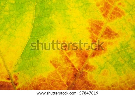 abstract autumn leaf background. - stock photo