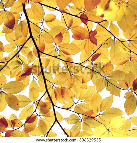 abstract autumn leaves background in sunny day - stock photo