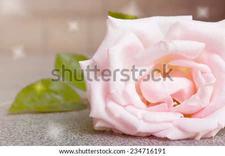 Abstract background and color filter of pink rose on a rock floor.
