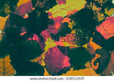 abstract background - autumn leaves closeup, vintage style photography - stock photo