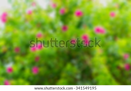 Abstract background blurred bokeh Pink flowers, green lawn behind the house. - stock photo