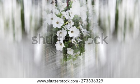 Abstract background . Close-up flowers of white petunias.  Blur effect defocusing filter applied, with vintage instagram look. - stock photo
