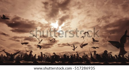 Abstract background : flock of pegeon on th roof with sun set