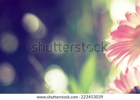 abstract background flower in vintage color tone - stock photo