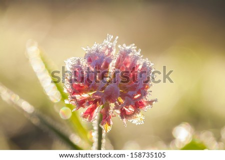 abstract background from a flower covered with hoarfrost