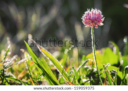 abstract background from a flower covered with hoarfrost - stock photo