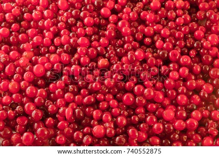 Abstract background from fresh cowberry. Close up