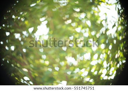 Foliage Mapple On Blurry Background Foliage Stock Photo