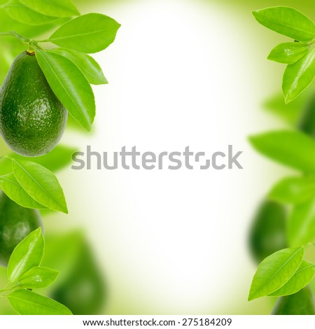 Abstract background made of avocado and leaves - stock photo