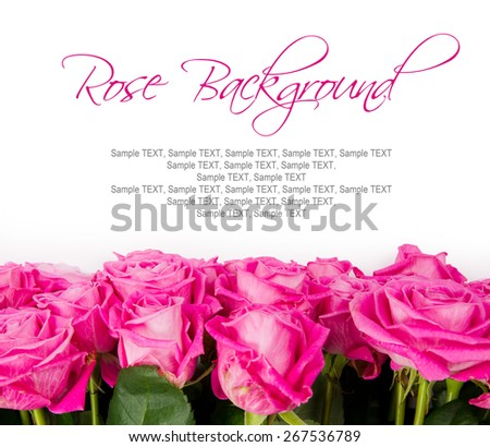 Abstract background made of rose blooms with white space for text - stock photo