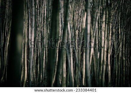 Abstract background: Misty and scary autumn forest, view of tree trunks - stock photo