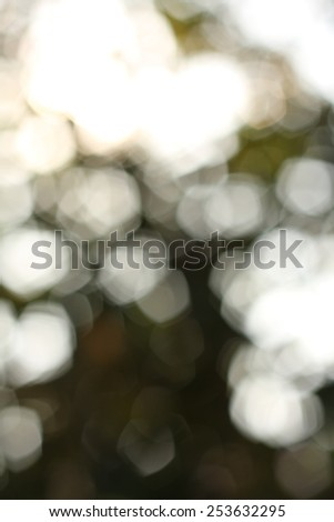Abstract  background nature,Blur Out of focus on tree leaves