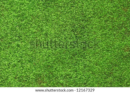 abstract background nature moss green closeup - stock photo