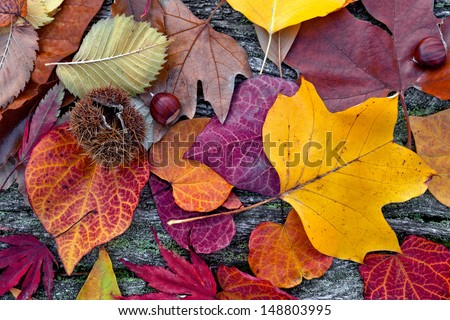 Abstract background of autumn leaves. Autumn background. - stock photo