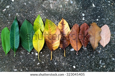 Abstract background of autumn leaves. leaves on dark background - stock photo