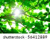 Abstract background of backlit green leaves with sun shining through and flare - stock photo
