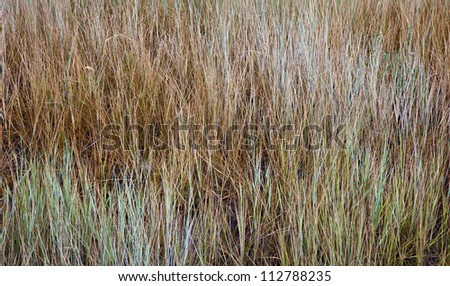 Abstract Background of Brown Grass - stock photo